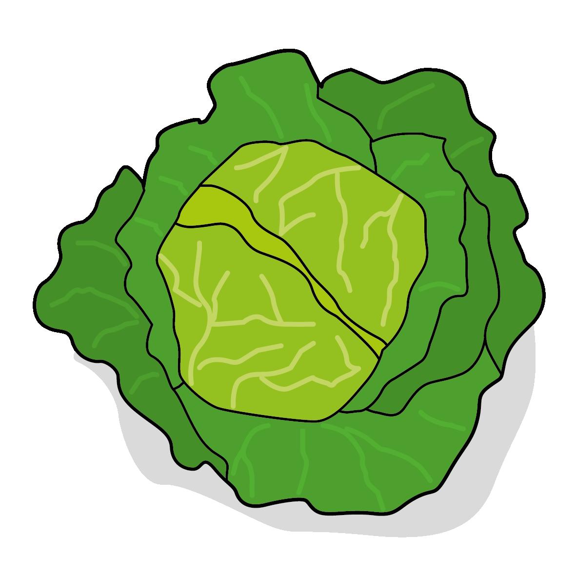 Icone d'un choux, ailmacoctte.com