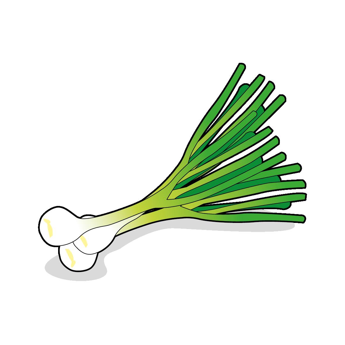 Icone de l'oignon nouveau, ailmacocotte.com